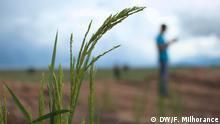 Brasilien Reisanbau koreanische Firma Oásis