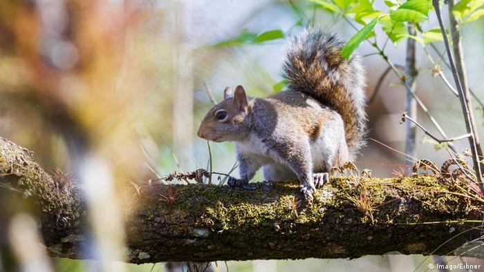 USA Florida Everglades Nationalpark Eichhörnchen (Imago/Eibner)