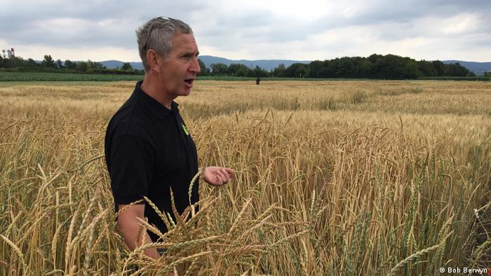 Plant ecologist Hermann Bürstmayr discusses and examines different types of grain at the BOKU/IFA ag research facility in Tulln, Lower Austria