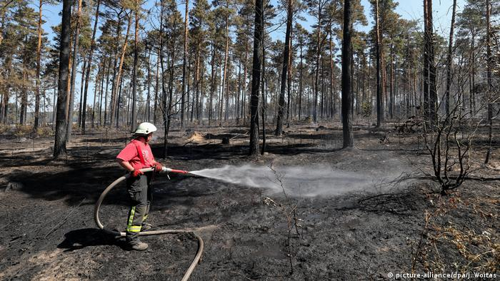 Deutschland Trockenheit | Waldbrand