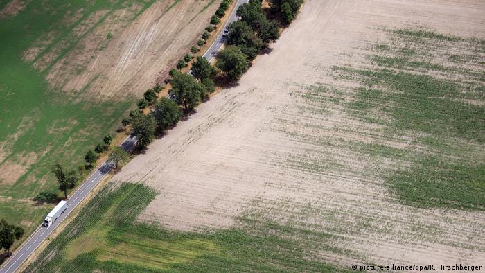 Em Brandemburgo, no leste do país, o verde está sumindo da paisagem