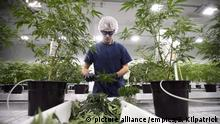Cannabis-Legalisierung in Kanada (picture alliance /empics/S. Kilpatrick)