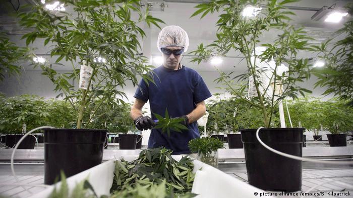 Cannabis-Legalisierung in Kanada