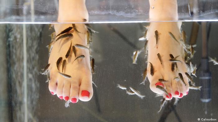 Fisch-Pediküre