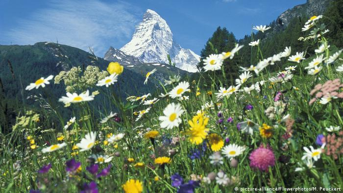 Schweiz - Blumenwiese (picture-alliance/Flowerphotos/M. Peuckert)