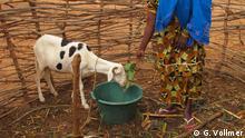 Bilder aus Mali. Sie zeigen das Dorf Balla, wo die NGO Pacindha Frauen in der Schafmästung ausbildet. Die Schafzucht soll sie gegen Ernteausfälle aufgrund zunehmender Dürre absichern, eine Maßnahme zur Anpassung an den Klimawandel. Fotografin ist Gerlind Vollmer.