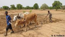 Global Ideas Schafzucht in Mali