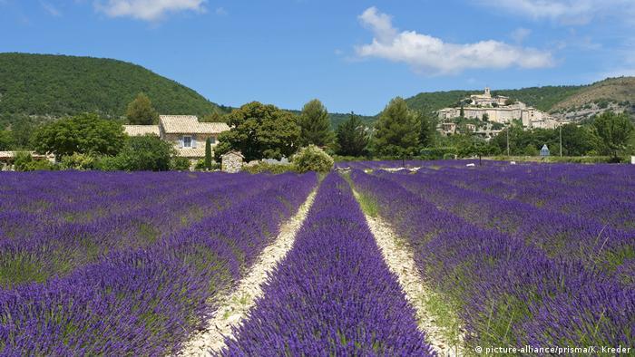Frankreich - Lavendelfelder in der Provence (picture-alliance/prisma/K. Kreder)