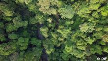 Abholzung durch Palmölplantagen im Regenwald