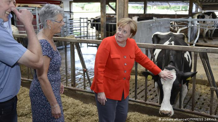 Angela Merkel visits a dairy farm (picture-alliance/CITYPRESS 24/Krick)