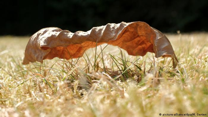 Dry leaf on dry grass (picture-alliance/dpa/M. Gerten)