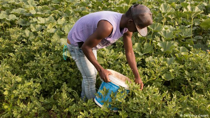 مشروع الممرات الخضراء في إيطاليا يفتح باب الهجرة القانونية أمام المهاجرين العاملين في الزراعة
