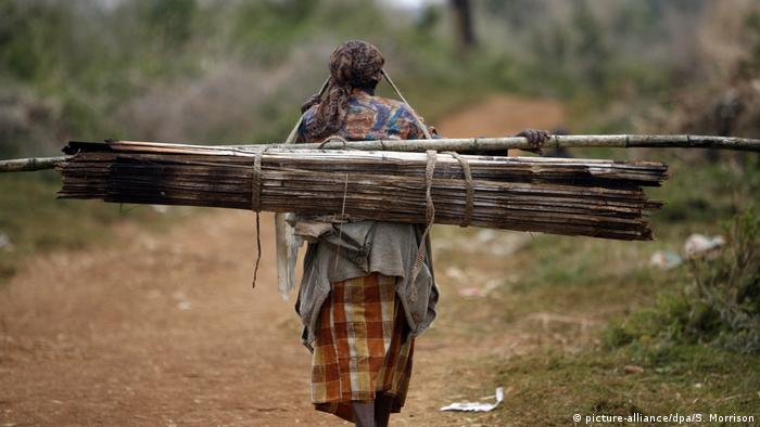 A woman walks with bamboo on her back
