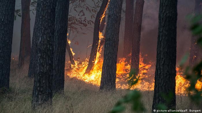 Лісові пожежі у Потсдамі