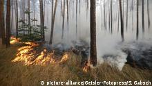 Pădure în flăcări la Potsdam