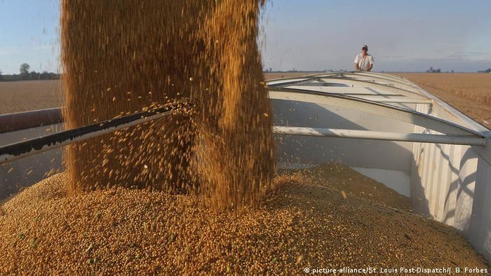 US soybean harvest