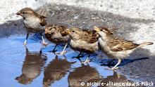 Vögel Sommer Hitze Wasser
