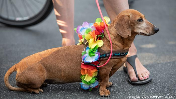 Hund beim Christopher Street Day in Berlin (picture-alliance/ZUMA/O. Messinger)