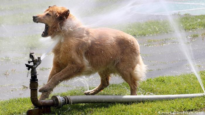 Berlin: Rasenbewässerungsanlage Hund