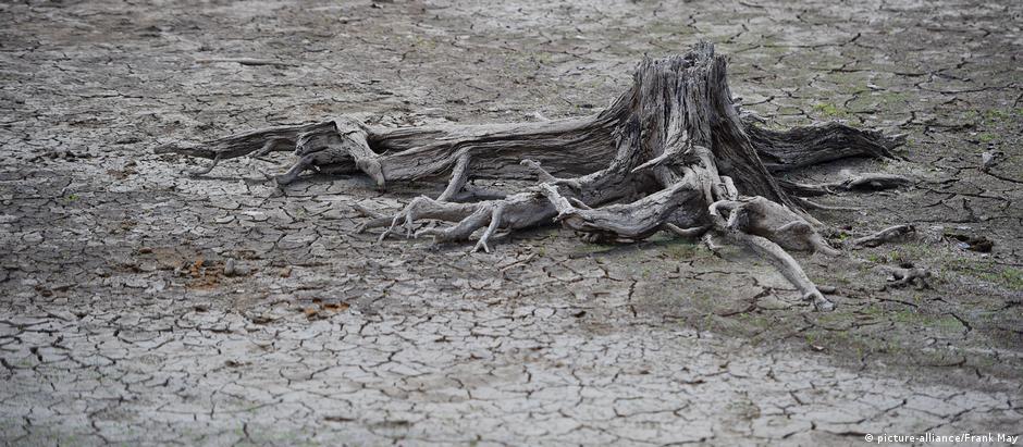 Paisagem desoladora em floresta alemã: não chove desde abril