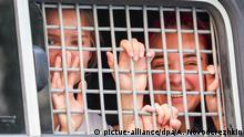 Russland Pussy Riot - Aktivisten auf dem Weg zum Gericht