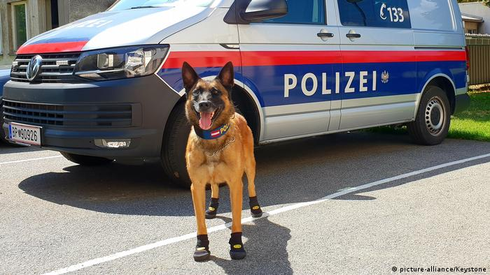 A police dog in Vienna wearing black shoes in front of a police car