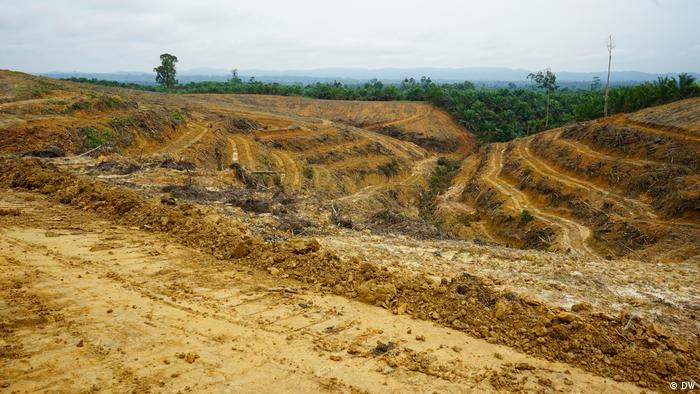 Clear-cut forests in Sumatra