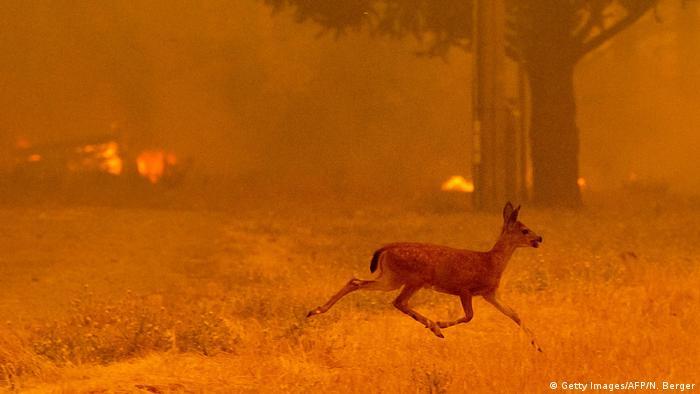 Incêndio em Mendocino, na Califórnia