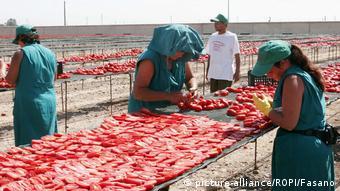 Μετανάστες εργάζονται σε χωράφια στη νότια Ιταλία