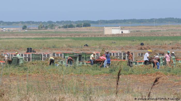 Italien Migranten arbeiten auf Tomatenfeldern bei Foggia ARCHIV (picture-alliance/ROPI/A. Pisacreta)