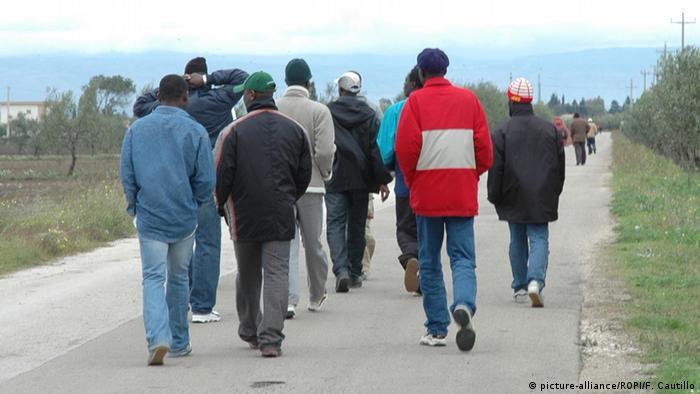 Italien Migranten arbeiten auf Tomatenfeldern bei Foggia ARCHIV