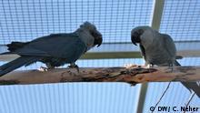 Zuchtanlagen der Association for the Conservation of Threatend Parrots e.V.