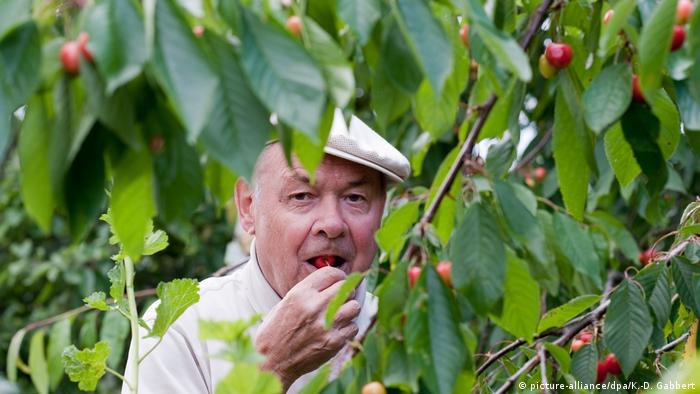 Мужчина ест черешню
