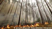 Waldbrände in Potsdam