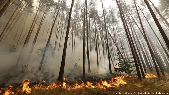 bäume pflanzen gegen klimawandel