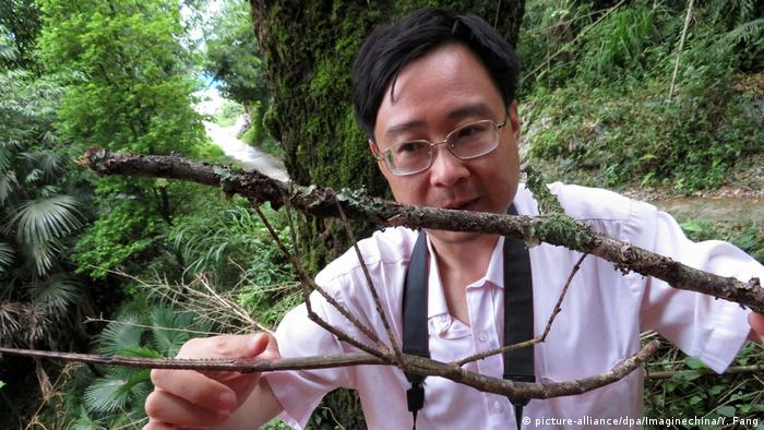Phryganistria chinensis Zhao (picture-alliance/dpa/Imaginechina/Y. Fang)