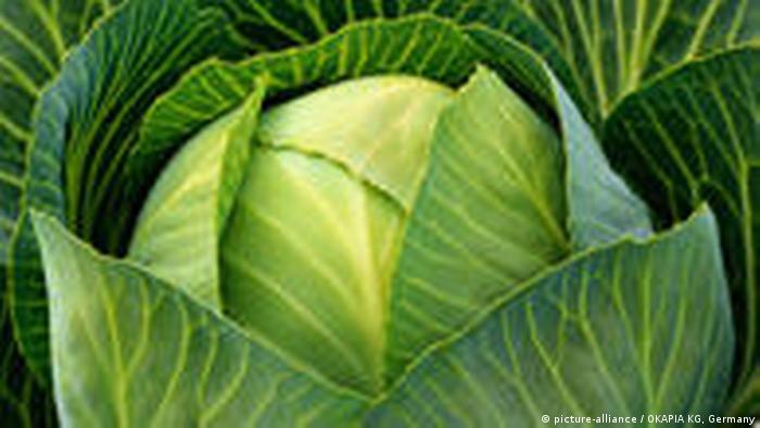 Botanik Gemüse Kohl