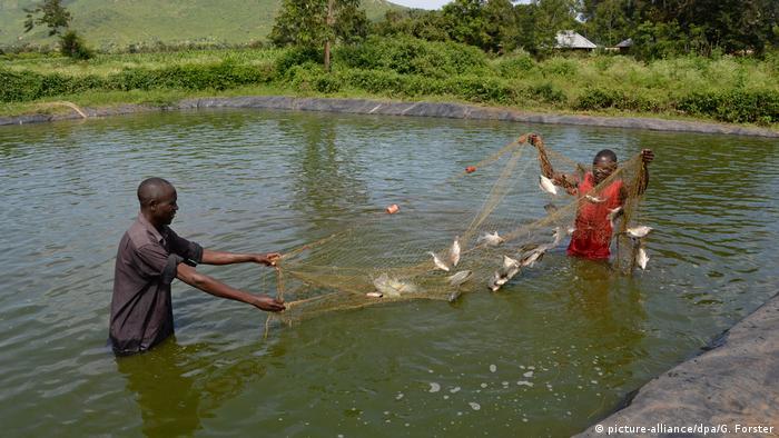Kenia Sex für Fische (picture-alliance/dpa/G. Forster)