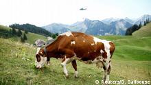 Schweiz Militär versorgt Kühe in den Bergen mit Wasser