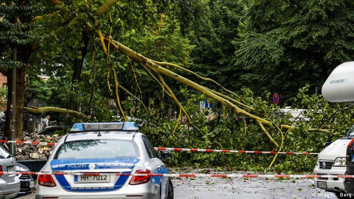Damaged trees in Hamburg