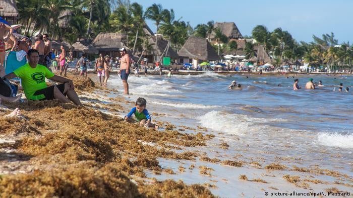 Sargaço acumulado em Playa del Carmen, no México