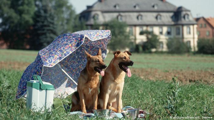 Dogs in a field under an umbrella (picture-alliance/C. Steime)