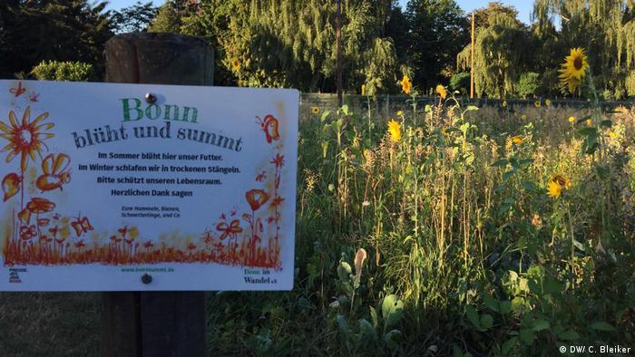 Butterfly garden in Bonn (DW/ C. Bleiker)