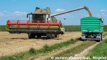 Deutschland Hitzewelle 2018 - Ernteausfälle | Weizenernte in Bayern