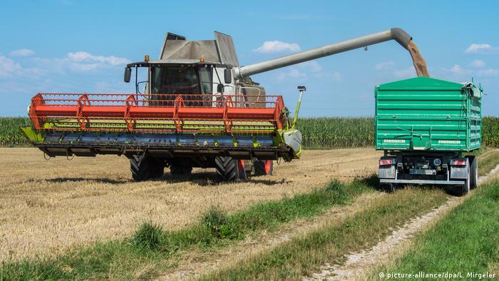 Los agricultores alemanes temen que se dañen sus cosechas.