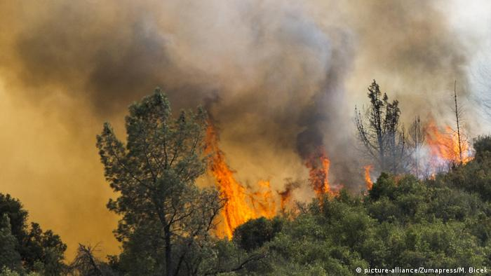 Wildfire in California (picture-alliance/Zumapress/M. Bicek)