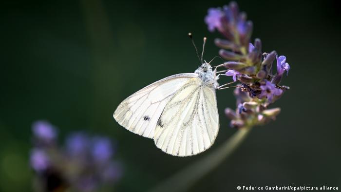 BdT - Insektenzählung
