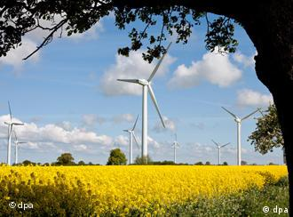 A wind farm visible in the distance, with a golden rapeseed field and tree in the foreground