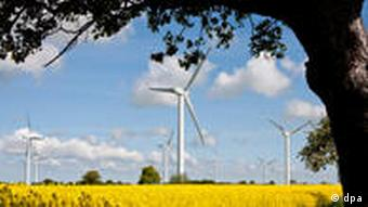 Windmills on a landscape of yellow flowers and trees