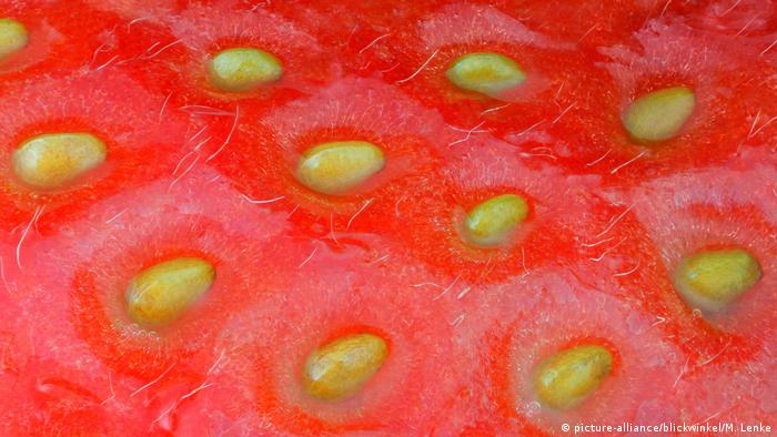 Can strawberries help cure intestinal inflammation